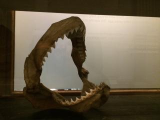 Bek met tanden